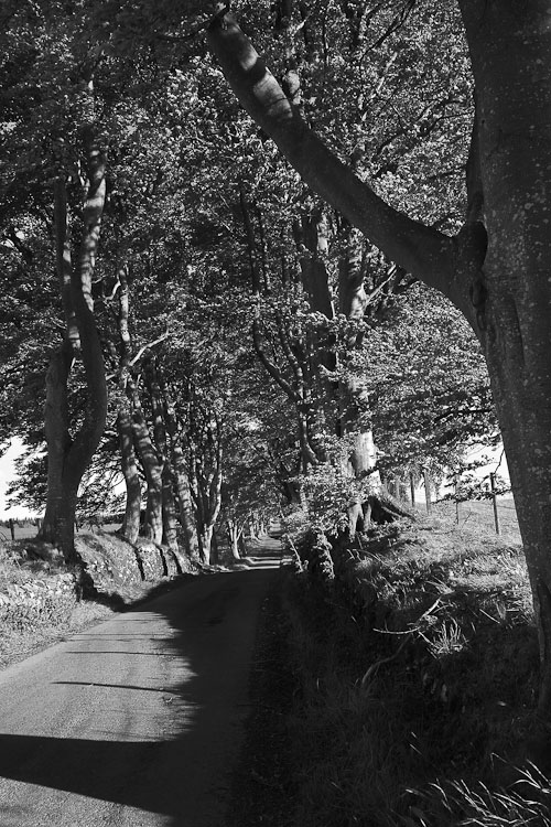 Blades of grass, trees and a little road in the sun