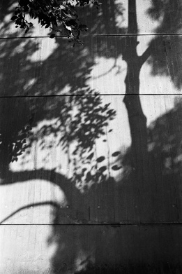 shadow of tree on concrete wall, branches, leaves, black and white