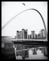Newcastle_Millenium_Bridge_Seagull_Black_and_White_(1_of_1)