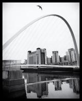 Newcastle_Millenium_Bridge_Seagull_Black_and_White_(1_of_1)