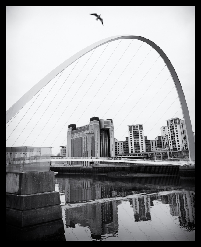 Newcastle Millenium Bridge With Seagull
