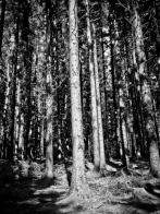 Trees_Kielder_(1_of_1)