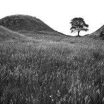 Hadrian_Tree_chevaugeon_(2_of_6)