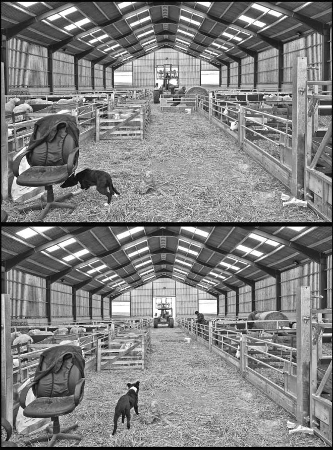 Northumberland Sheep Shed Time Lapse 1 Work