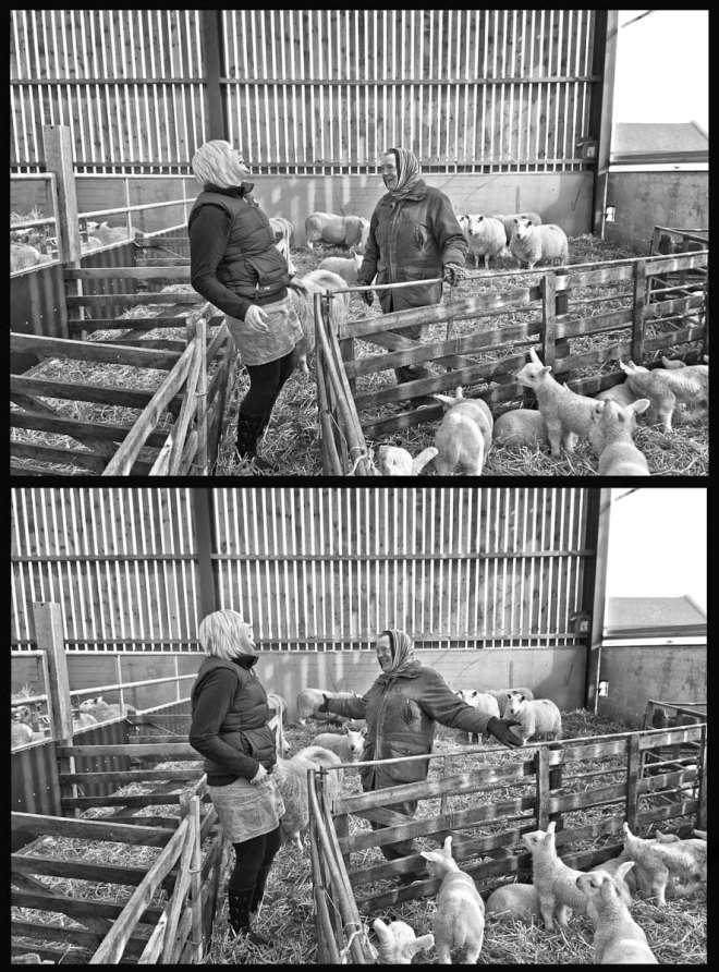 Northumberland Sheep Shed Time Lapse 2 Banter