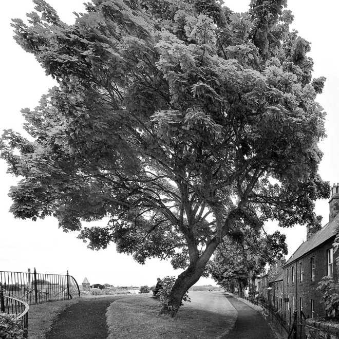 Près de Mon Arbre     Close to my Tree