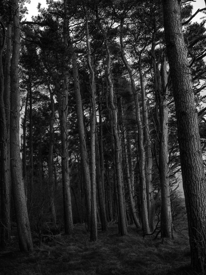 Trees at Dusk